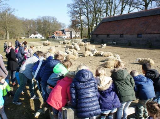 De kleuters van de ESV hebben de lammetjes bezocht van de Schaapskooi op de Ginkelse Heide